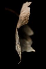 Autumn-12