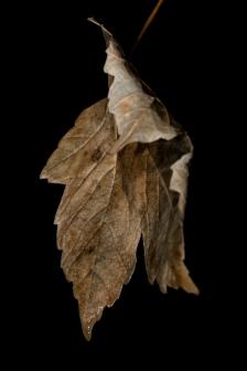 Autumn-13