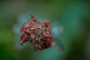 Autumn-18