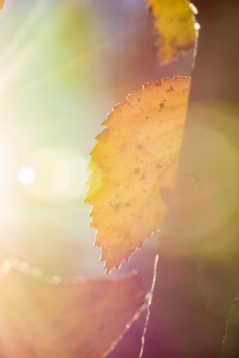 Autumn-23