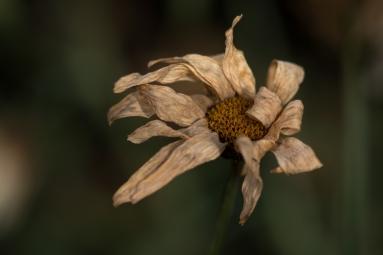 Autumn-24
