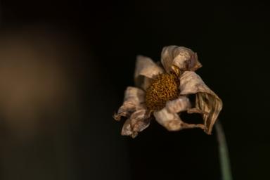 Autumn-25