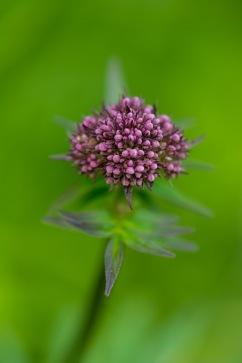 Flower-25