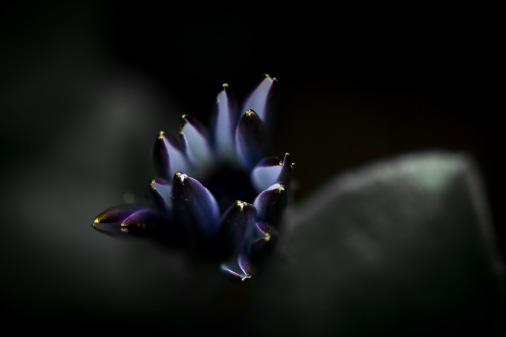Flower-30