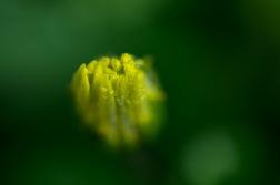 Flower-36