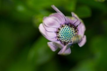 Flower-44