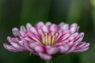 Flower-45