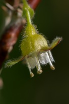 Flower-8