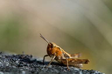insect-11