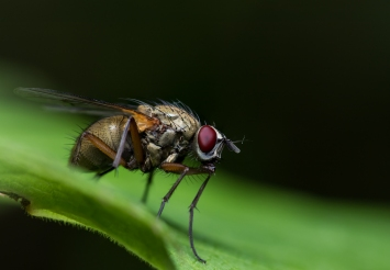 insect-12
