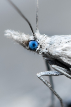 insect-43