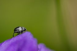 insect-8