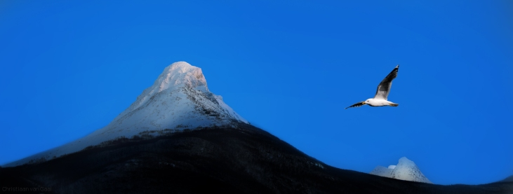 Two mountains with seagull