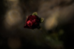 artsy flowers-2