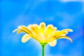 artsy flowers-3