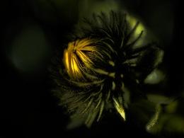 artsy flowers-4