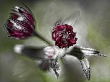 artsy flowers-5