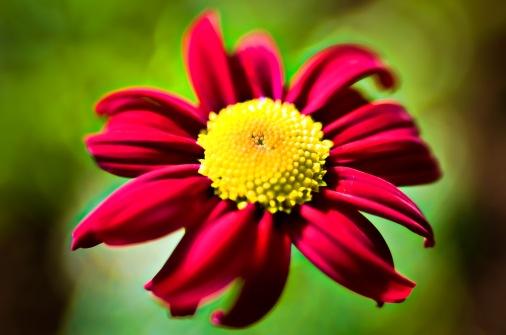 artsy flowers-6