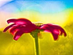 artsy flowers-7
