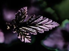 artsy flowers-8